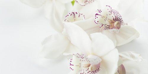 ¿Dónde conseguir orquídeas en la CDMX? - Boycottriaa